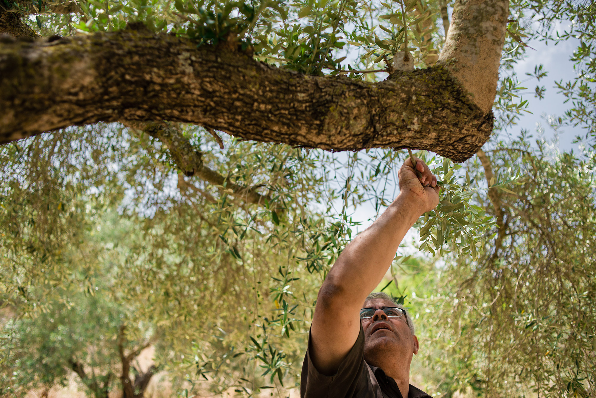 One Land, One Love – Palestinians and Israelis Work Together For the